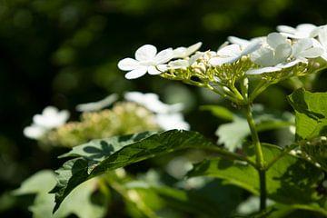 WHITE FLOWER van Kelly Durieu