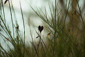 Herz in der Natur von Photo Julleke