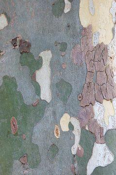 Bast van een plataan van Margot van den Berg