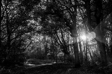 Sonnenuntergang im Wald in schwarz und weiß von Linsey Aandewiel-Marijnen