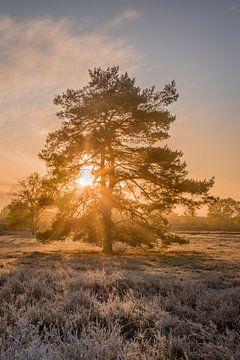 Sur les landes au lever du soleil sur John van de Gazelle