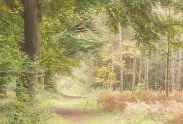 Herbst-Farben von Connie de Graaf