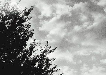 Zwart wit foto bomen en wolken von Danielle Vd wegen