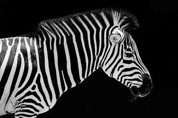 Zebra portret von Arno Maetens