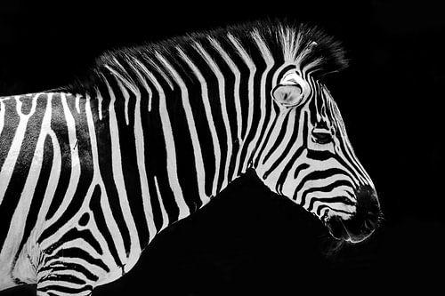 Zebra portret van