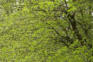 Frisse Groen