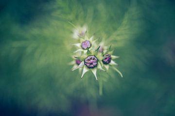 Blütenknospen von Kristof Ven