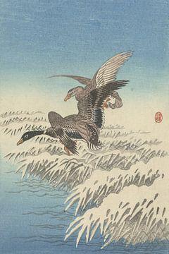 Entenpaar fliegt über den schneebedeckten Schilfgürtel des Ohara Koson