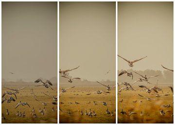 lauwersmeer triptychon 15 von anne droogsma
