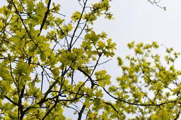 Golden leaves van Gerben van den Hazel