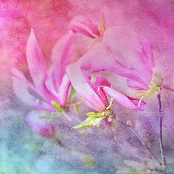 Magnolienstillleben van Heike Hultsch