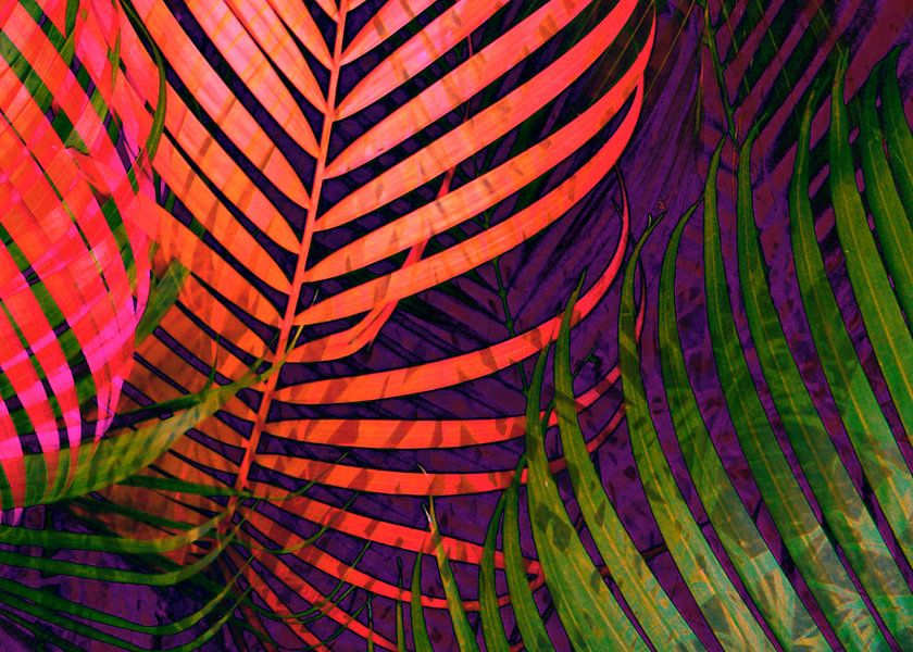 COLORFUL TROPICAL LEAVES no5  van Pia Schneider