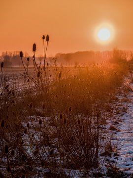 Winter Sonnenaufgang in den Feldern die Niederlande von Cynthia Bil