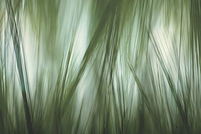 Abstraktes Gras von Arjen Roos