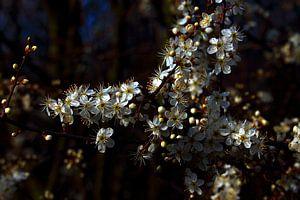 Blühender Strauch van