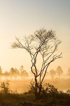 Silhouet langs een veenplas van Ron Poot
