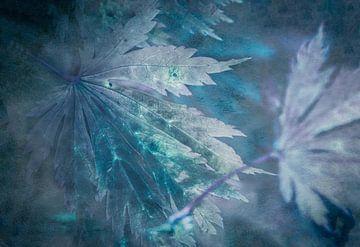Ahornbladeren in blauw van Annette Hanl