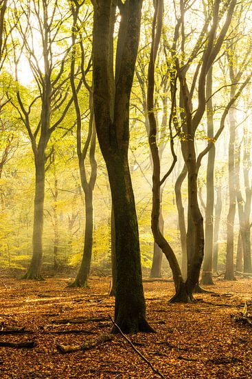 Bomen in zacht ochtend licht