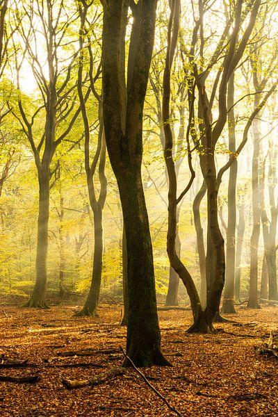 Bomen in zacht ochtend licht van Albert Lamme