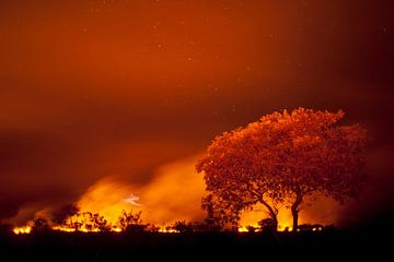 Grasland in brand in de Pantanal von AGAMI Photo Agency