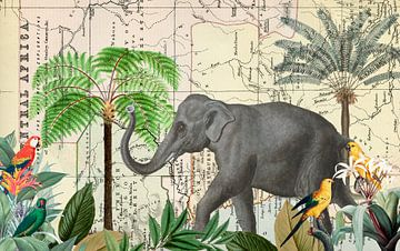 Olifant in Afrika van Andrea Haase