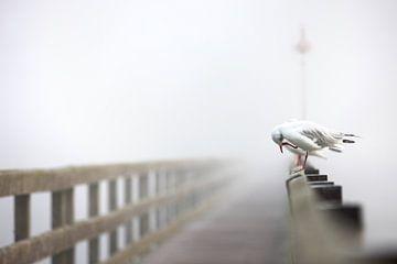 Möwe auf Holzbrücke von Jana Behr