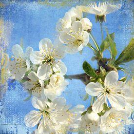 Frühlingsblüte van Heike Hultsch
