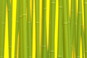 Digital Bamboo van