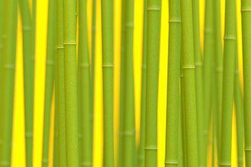 Digital Bamboo van Jörg Hausmann