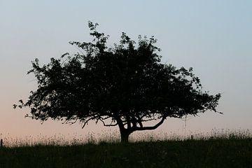 Einsamer Baum von Bert Kok