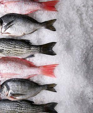 Poisson frais sur glace 11010184 sur BeeldigBeeld Food & Lifestyle
