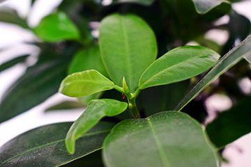 Grüne Blätter Pflanze Nahaufnahme von Tessa Selleslaghs