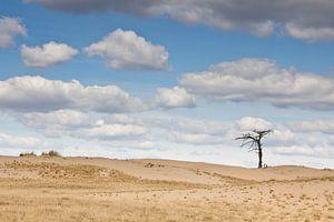 Lonely tree van
