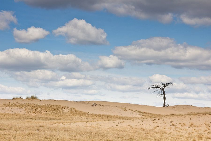 Lonely tree van Peter van Rooij