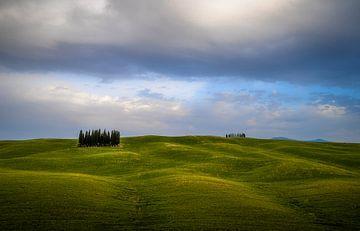 Toscaanse Cypressen van Roelof Nijholt