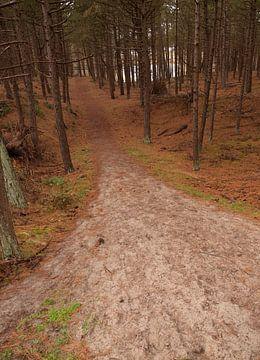 Bospad in Hoornse Bos, Terschelling von Rinke Velds