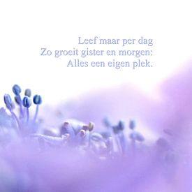 Leef maar per dag: Blue Wave van Marlies Prieckaerts
