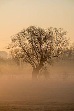 Mooie boom op een grote weide in de mist van Marcel Derweduwen