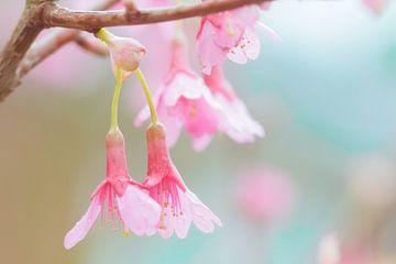 Pastel Spring van Natascha Teubl