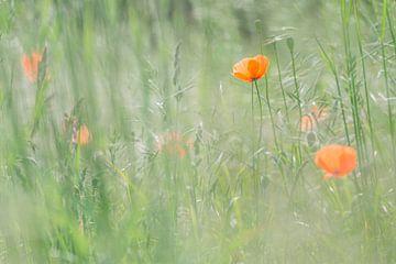 Mohnblumen von Bert Kok
