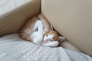 Crazy cat van caitlin huijsing