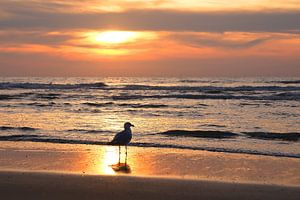 Sonnenuntergang an der Küste von Zandvoort von tiny brok