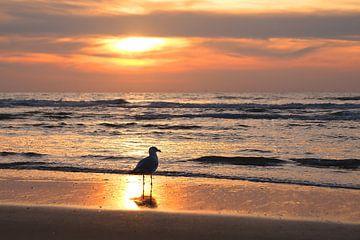 zonsondergang aan de kust van Zandvoort van tiny brok