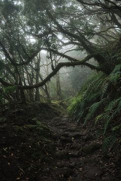 Tenerife von Marvin Schweer