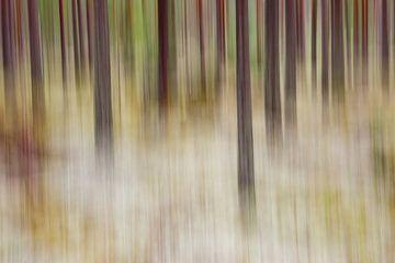 forest sur Pim Leijen