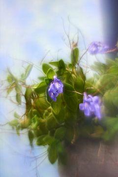 Kreativ mit Blumen (1) von Wim van Berlo