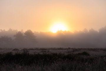 Sonne durch den Nebel von Tania Perneel
