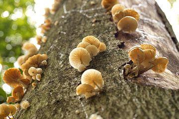 Hoog in de boom... van Micky Bish
