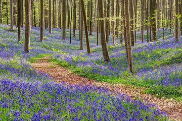 In het blauwe bos van Michael Valjak