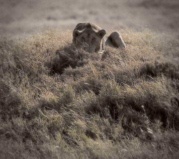 leeuw sur Anne-Marie Vermaat